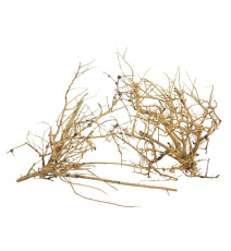 ProGrow Branch Wood 0,1kg
